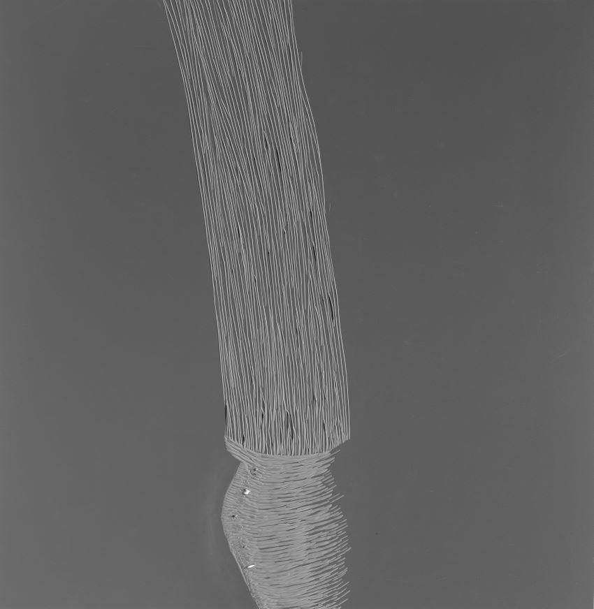 זעיר אנפין (כד)