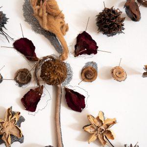 פרח קיר -קוץ כרוכית