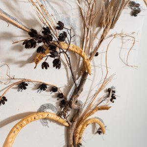 פרח קיר – במיה ברוקולי