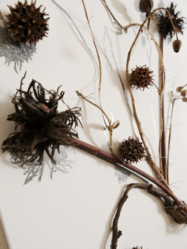 פרח קיר – ערמוני עץ