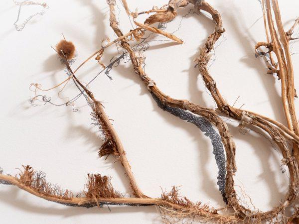 פרח קיר – קנוקנות קייל